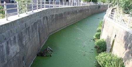 آزولا، تهدیدی برای رودخانه های آستارا