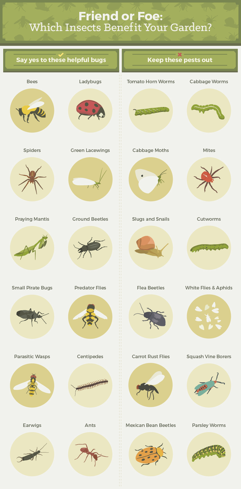 which_insects_benefit_your_garden_001.png