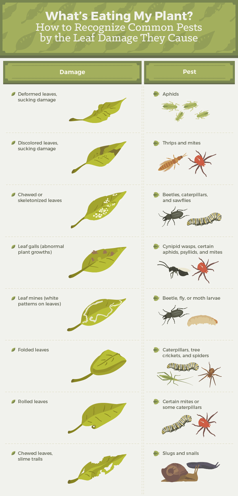 recognize_common_pests_by_leaf_damage_002.png